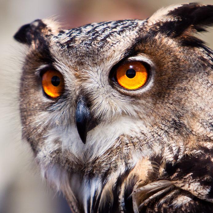 swingerclub die eule hobbyhure owl